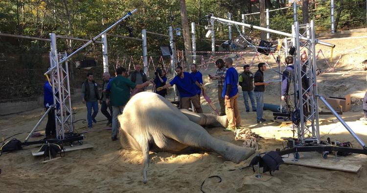 """فيل حديقة حيوانات تبليسي الشهير """" جراندي"""" بطل فيلم وثائقي"""
