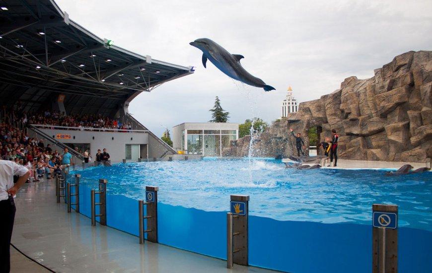 أفضل الأماكن في باتومي جورجيا - عرض الدلافين في باتومي dolphinarium